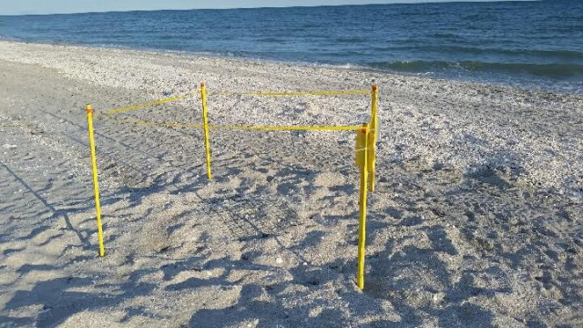 sea turtle nest at OR